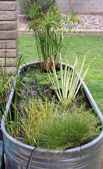 The stock tank pond - an apartment/small space friendly water feature.