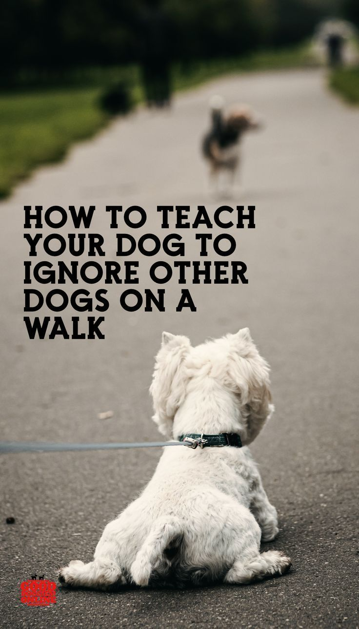 How To Teach Your Dog To Ignore Other Dogs On Walks Dogs Dog