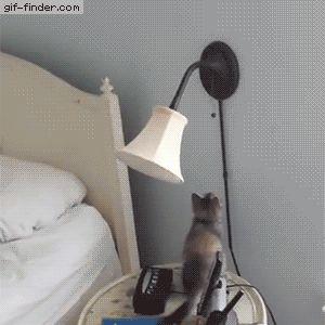 Kitten has a bright idea
