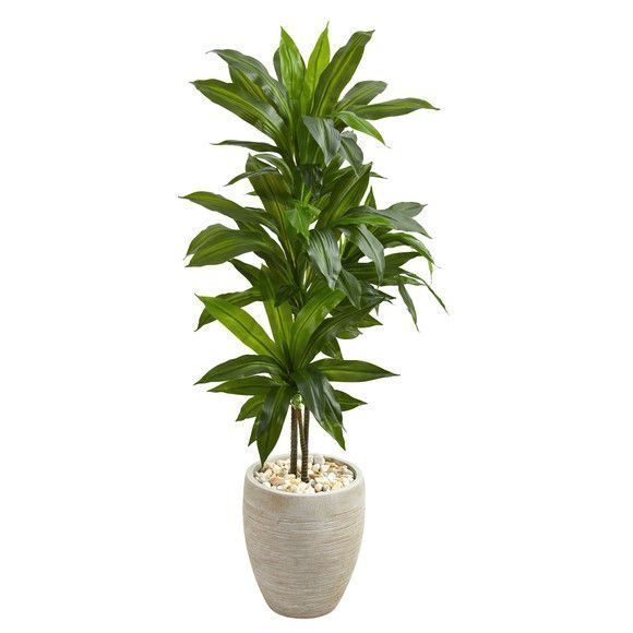 4 Dracaena Artificial Plant In Sand Colored Planter Real Touch 1000 Skincare Skin Clearskin Antia In 2020 Artificial Foliage Fake Plants Decor Artificial Plants