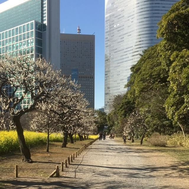 VIDEO: Hama Rikyū is a beautiful landscape garden and a good place to see the Japanese plum trees.