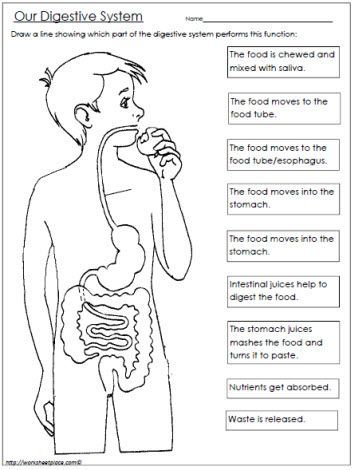 FREE Digestive System Worksheet www.homeschoolgiveaways.com FREE worksheet to teach your upper elementary students about the digestive system!: