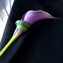 purple calla lilly boutonniere