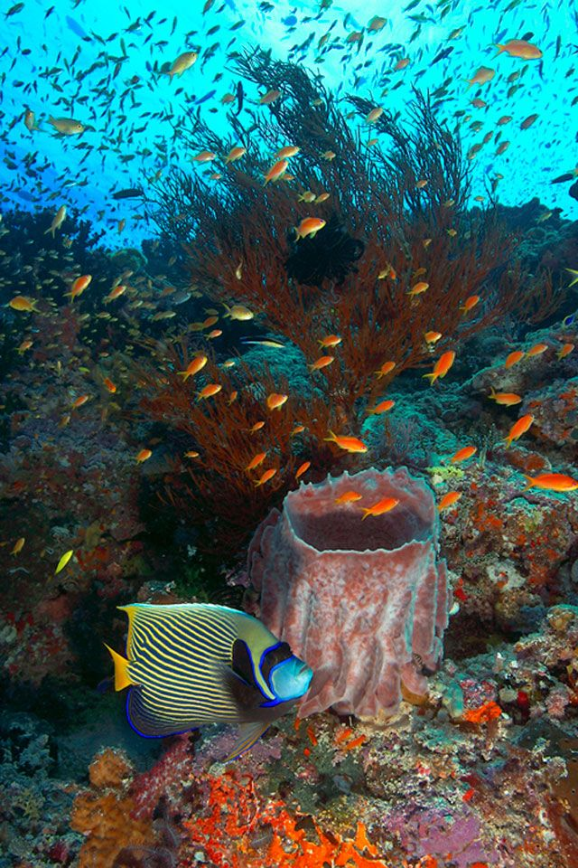 Tropical Reef and Emperor Angelfish