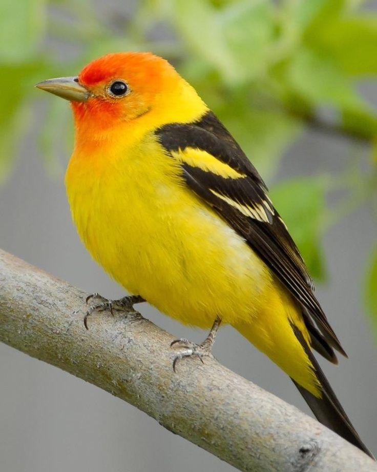 Beautiful yellow...