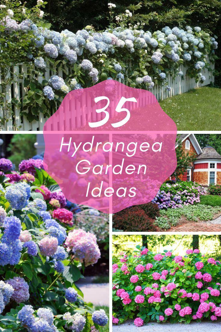 35 Hydrangea Garden Ideas Pictures Home Stratosphere Hydrangea Garden Vertical Herb Garden Garden Care