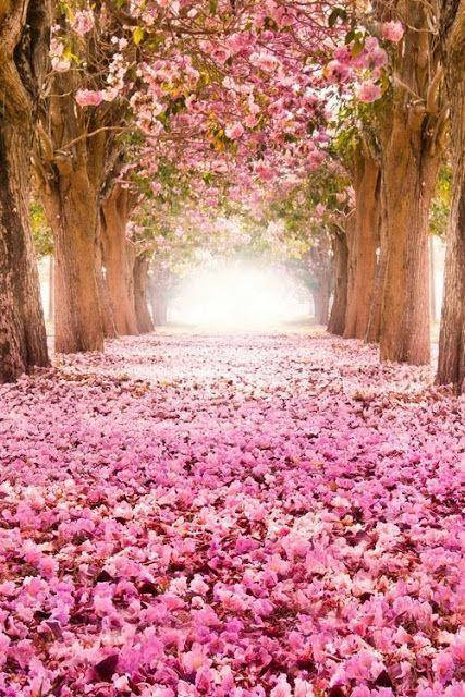 beautifull Small pink flowers