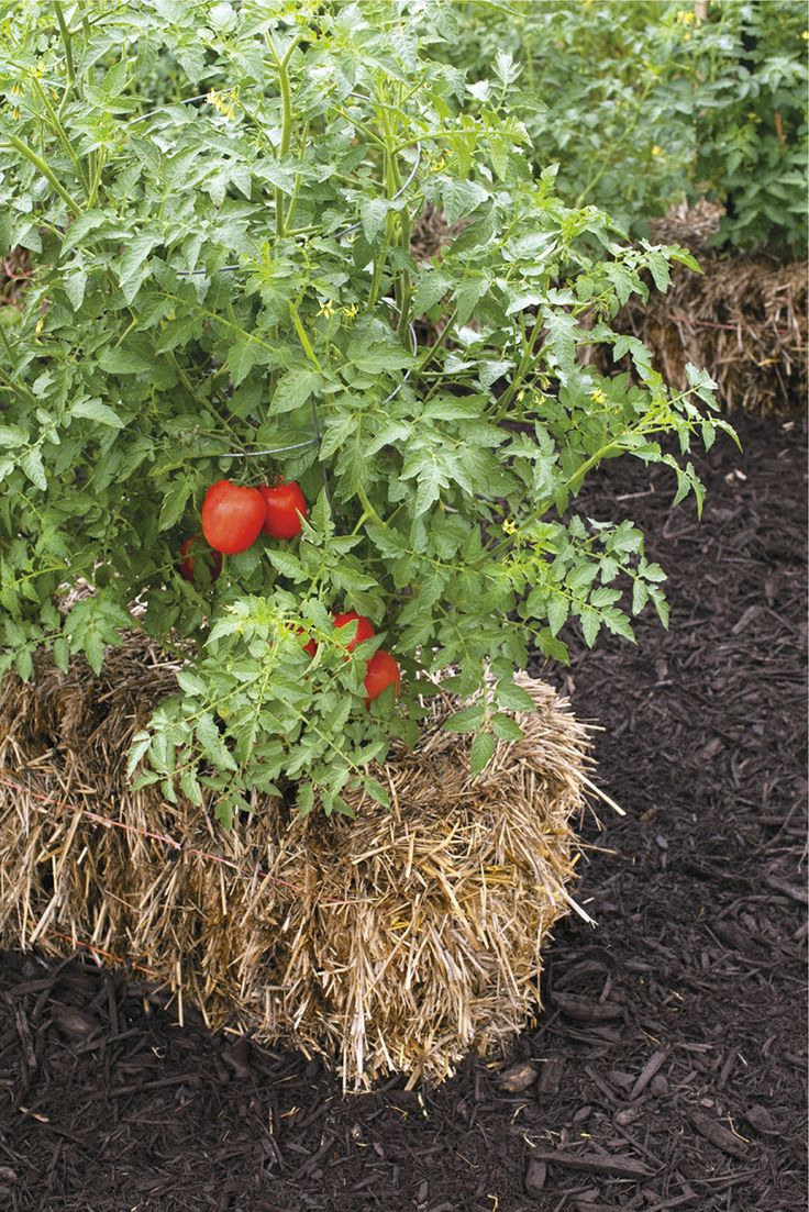 If you have poor soil, limited space, or difficulty leaning over, try a simple straw-bale garden with herbs, a couple of tomato plants, and flowers, courtesy of the 2014 All-Seasons Garden Guide! Photo credit: Tracy Walsh