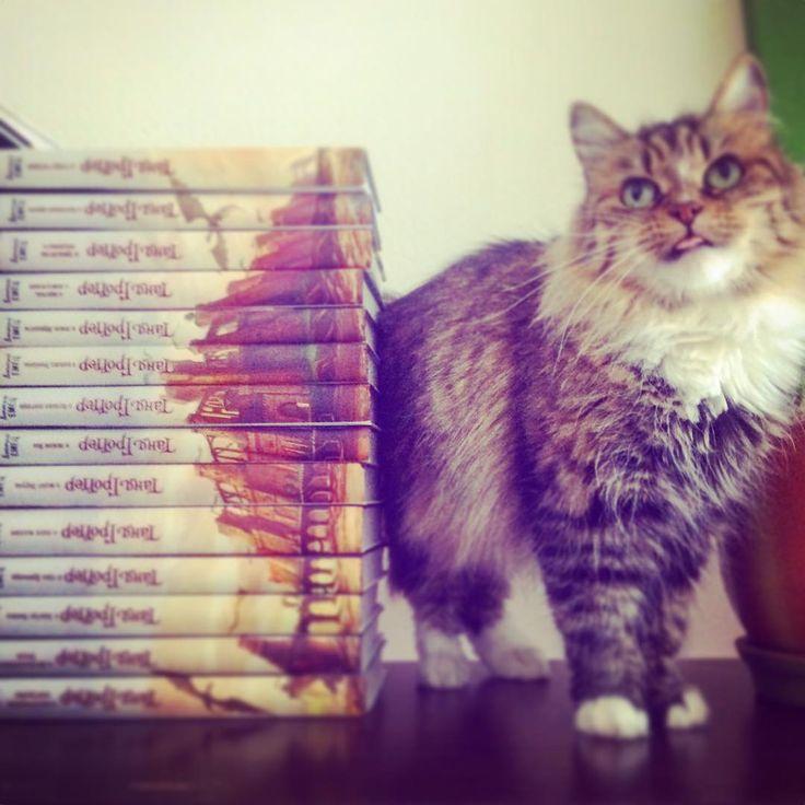 Где полтора года оформляла эту серию, первый раз рисовала замок, наконец-то пришли все книги из издательства, и в википедию меня вписали-) #книги #cats #танягроттер #plesantcats #art #illustration #spb