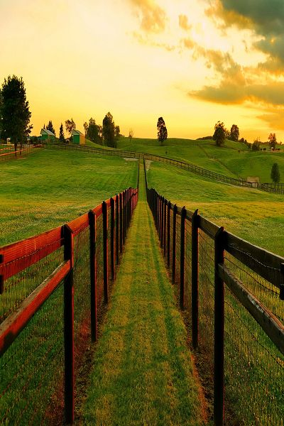 Country beauty. (Senerii: Leading to dream byAZ Imaging)