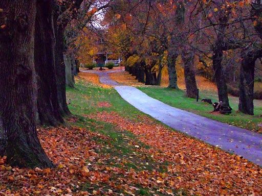 pictures of tree lined driveways | Tree-lined driveway