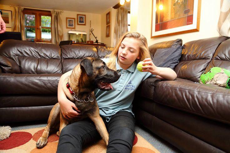 Большой пес с хозяйкой