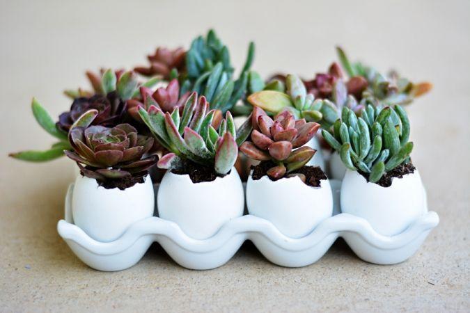 Succulent Eggshell Centerpiece