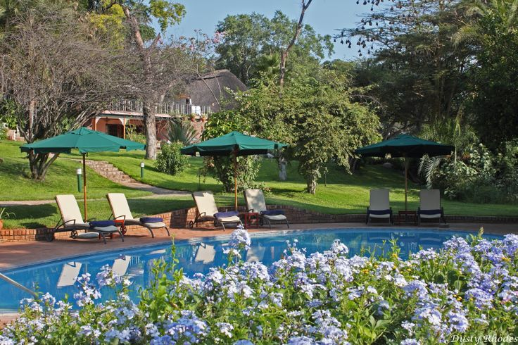Sparkling pool of the Safari Lodge.