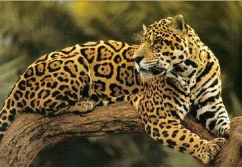 real jungle animals - Google Search