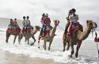 Ride a camel on the beach in Coffs Harbour!