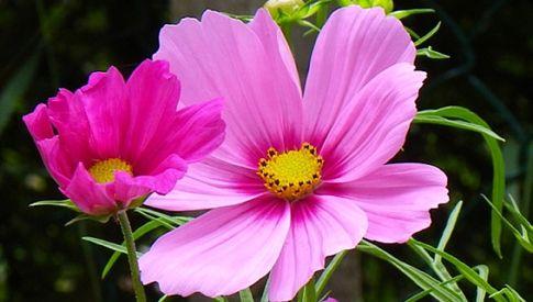 17 migliori idee su fiori semplici su pinterest fare fiori for Fiori semplici