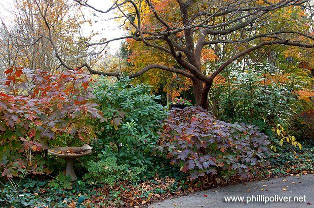Dirt Therapy: A walk through the fall garden...dogwood, oakleaf hydrangea, azalea, mahonia, and rhodendron
