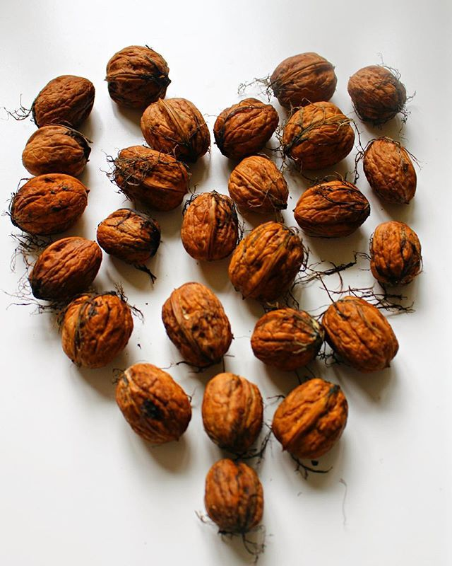 I found these beauties in the street this morning, gift of mother nature  Me encontré estas nueces mientras caminaba esta mañana #suerte #nature #heart #love #fall #winter #yummy #nuts #walnut #nueces #invierno #amor #vegan #eatclean #goodfats #gift #regalo #raw #vegetarian #whatveganeat #picoftheday #instagood #naturaleza
