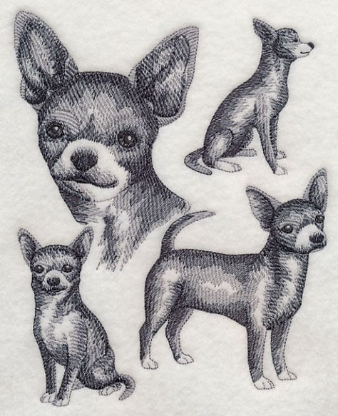 Short-haired Chihuahua Sketch