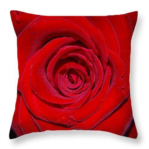 Cuscini - Close-up di una rosa rossa tiro cuscino da Orazio Puccio