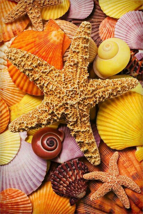 этого картинки на телефон морская тематика близка ирме любовью