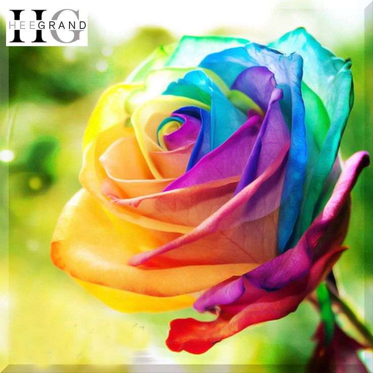 Find More Diamond Painting Cross Stitch Information about 3D DIY Diamond Painting 2015 New Rainbow Colorful Rose Flower Round Rhinestone Decorative Painting Diamond Embroidery,SHB275,High Quality painting nude,China painting bedroom Suppliers, Cheap painting sheep from Encounter in 2015 on Aliexpress.com