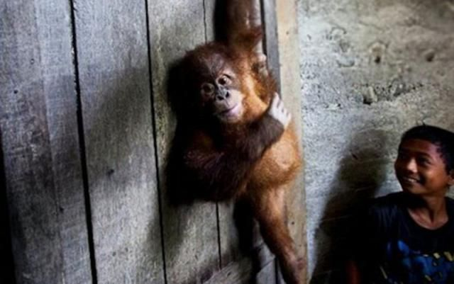Is the Cute Animal Photo You're Sharing Supporting Cruelty? 3 Questions to Ask…