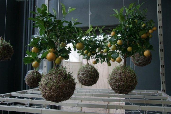 Tuinen Creativiteit En Vindingrijkheid Voor Elke Hoek Creativiteit Tuinen Vindingrijkheid Hangender Garten Pflanzen Hangende Pflanzen