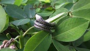 Anel de prata serpente, Kundalini, cobra, nag, chackras, nirvana                                                                                                                                                                                 Mais