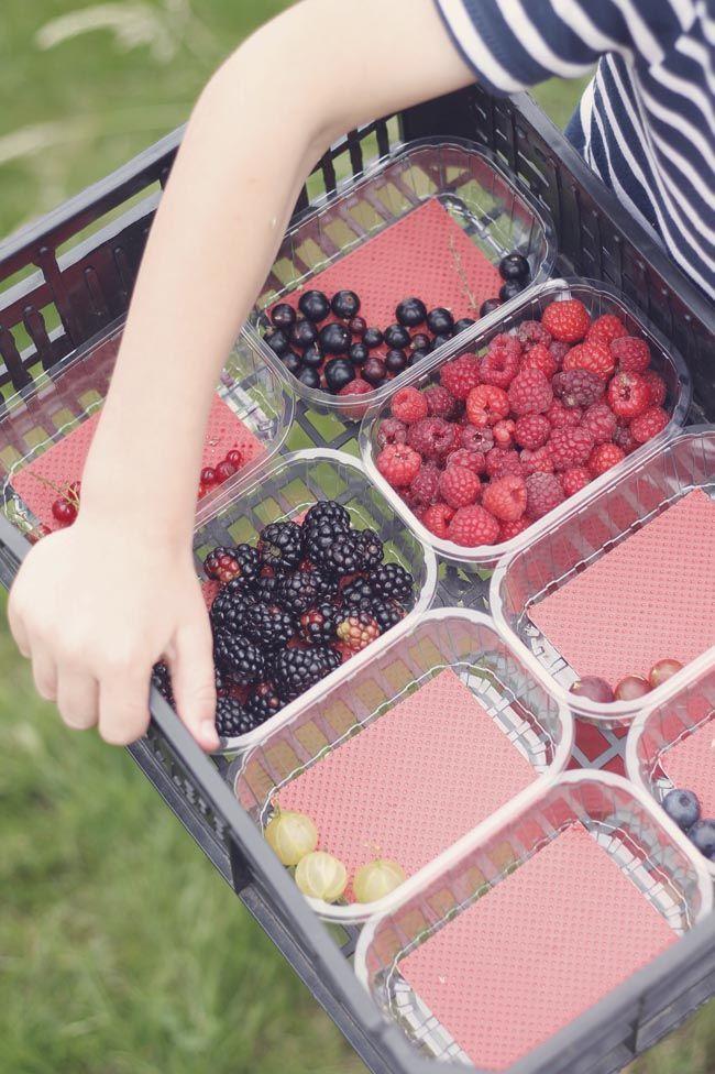 frambuesa el malain Llevar a los niños a recoger fruta en la finca Malain (Asturias)