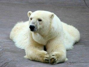 7 Animales salvajes del mundo