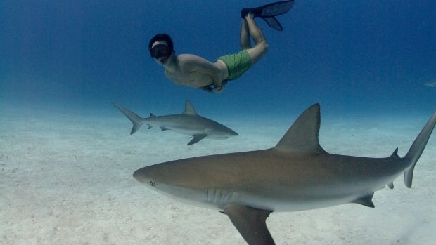 Rest in peace Rob.  Filmmaker & conservationist Rob Stewart is seen free diving with Caribbean reef sharks in Freeport, Bahamas.