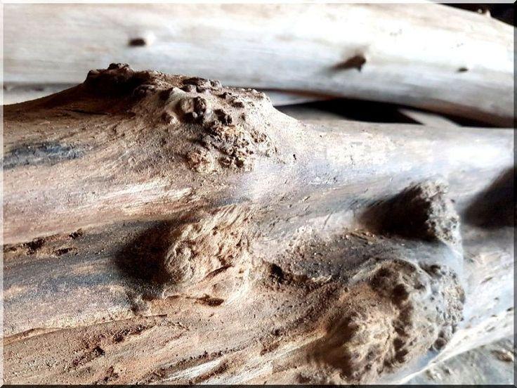 Csomoros akácfa rönk