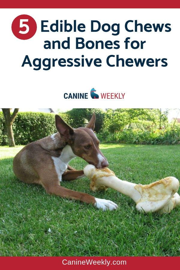 5 Best Safe Dog Bones And Chews For Aggressive Chewers Dog Chew