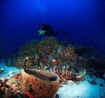 Morotai, North Maluku. Photograph by Michael Sjukrie (2006).