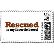 Rescued Is My Favorite Breed PostageBreeds Postage, Animal Lovers, Rescue Baby, Stickers, Favorite Dogs, Animal Worldwide, Cat Rescue, Favorite Breeds, Breeds Round