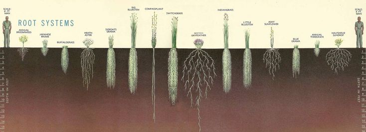 Perennial grass are great systems to use for bioenergy. Gratitude for Grass - Holistic Management International