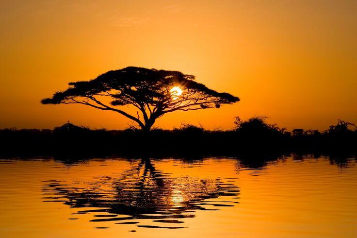 Savanna tree water Africa