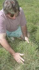 Carolina lawns- guides to maintaining quality turf. Links for Ag Extension and NCSU for info on choosing/caring for grass and planting winter ryegrass.