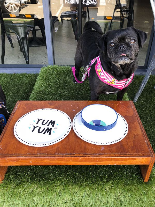 Pet Friendly Cafe Maggie S Dog Cafe Coffs Harbour The Pug Diary Dog Cafe Pet Cafe Dog Restaurant