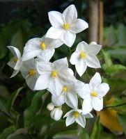 planten voor zonnige warme tuin