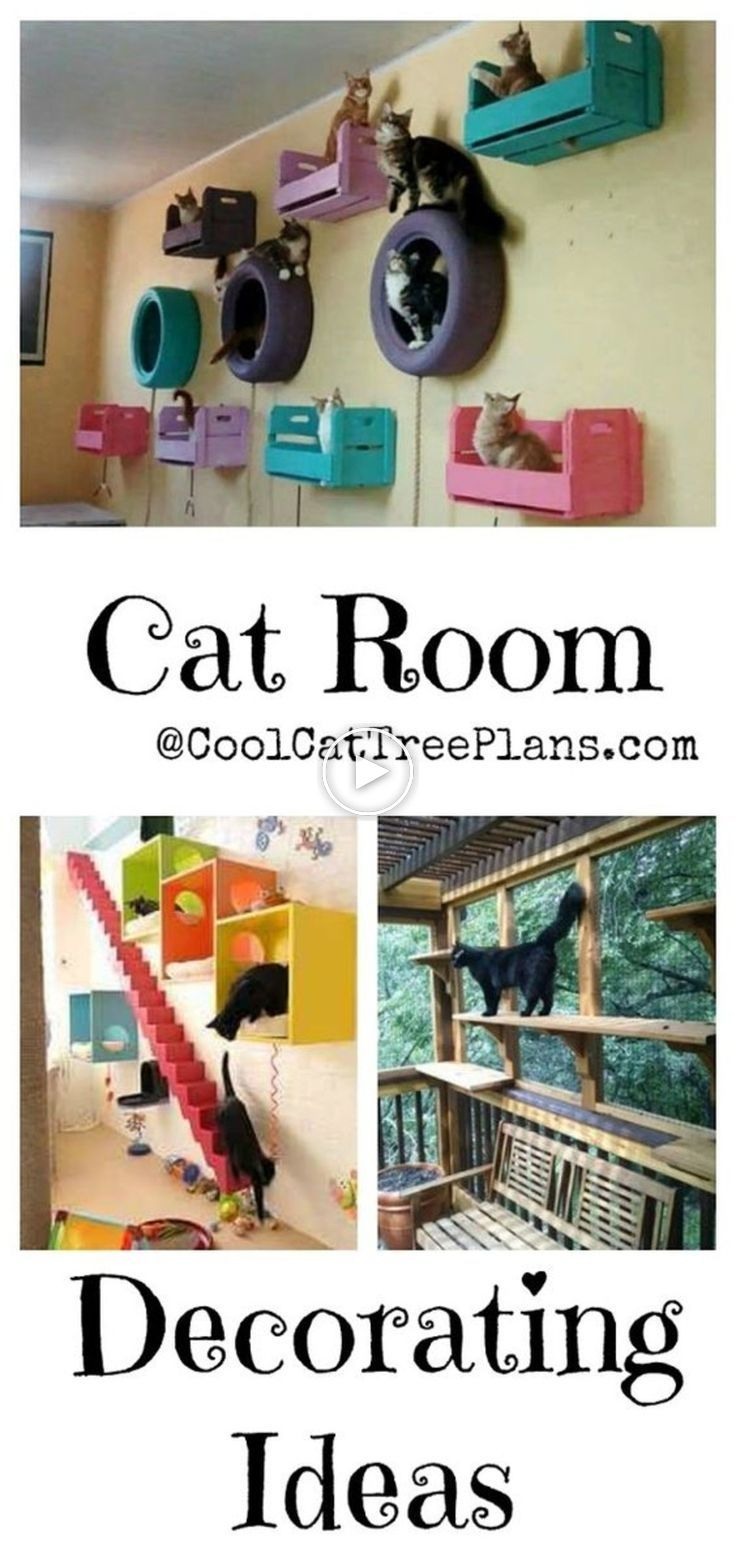 Cat Room Ideas Every Crazy Cat Lady Wants To Get Her Hands On Cat Room Cat Tree Plans Crazy Cats