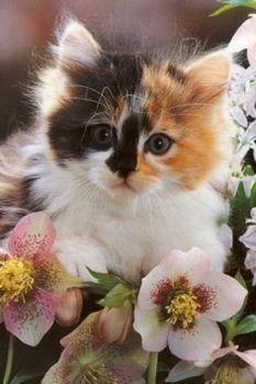 beautiful kitten (77 pieces)