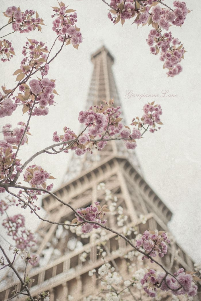 Pink and White Cherry Blossoms at the Eiffel Tower-by Georgiana Lane