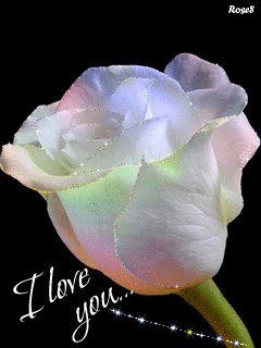 Rose I – Google+