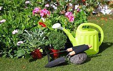 Отличный самодельный состав от болезней растений - Садоводка