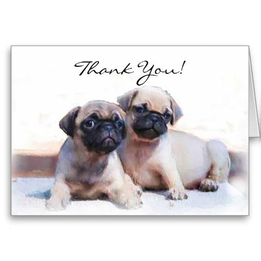 >>>This Deals          Thank You Pug puppies greeting card           Thank You Pug puppies greeting card today price drop and special promotion. Get The best buyShopping          Thank You Pug puppies greeting card Review from Associated Store with this Deal...Cleck Hot Deals >>> http://www.zazzle.com/thank_you_pug_puppies_greeting_card-137715370644755936?rf=238627982471231924&zbar=1&tc=terrest
