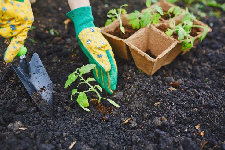 Cosa coltivare a gennaio - Dalle carote alle cipolle, dalle melanzane ai peperoni: ecco come organizzarsi durante il primo mese dell'anno con le coltivazioni