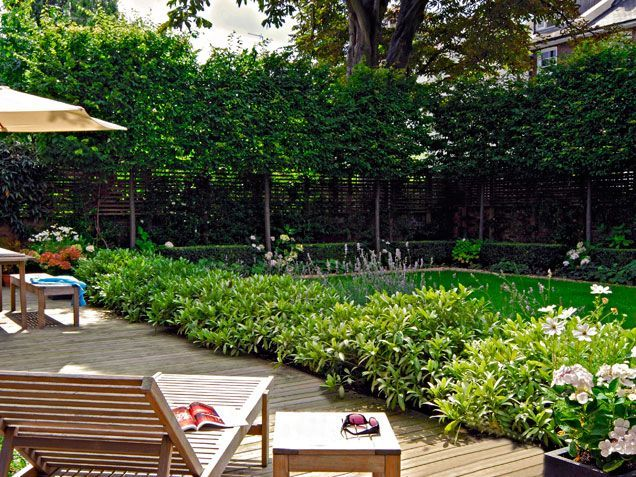 Backyard Privacy Landscaping Trees